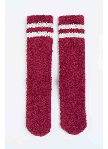 Penti Penti Bordeaux Çizgili Kadın Soket Çorap Renkli